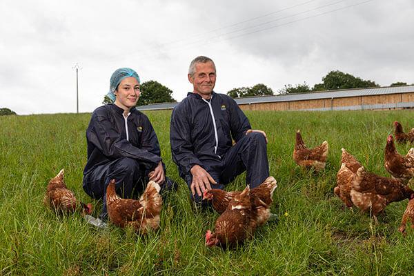 Production poules pondeuses bio