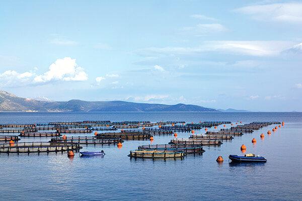 Bassin aquaculture international