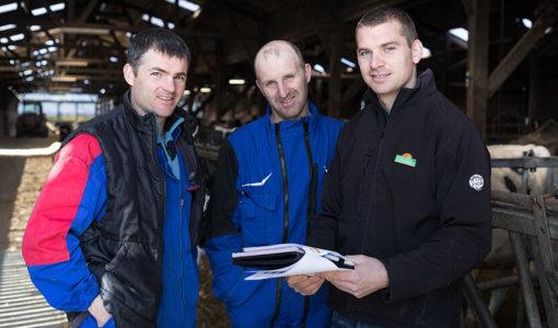 conseil technique en production laitière