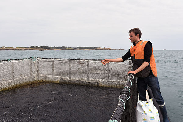 La truite aux algues