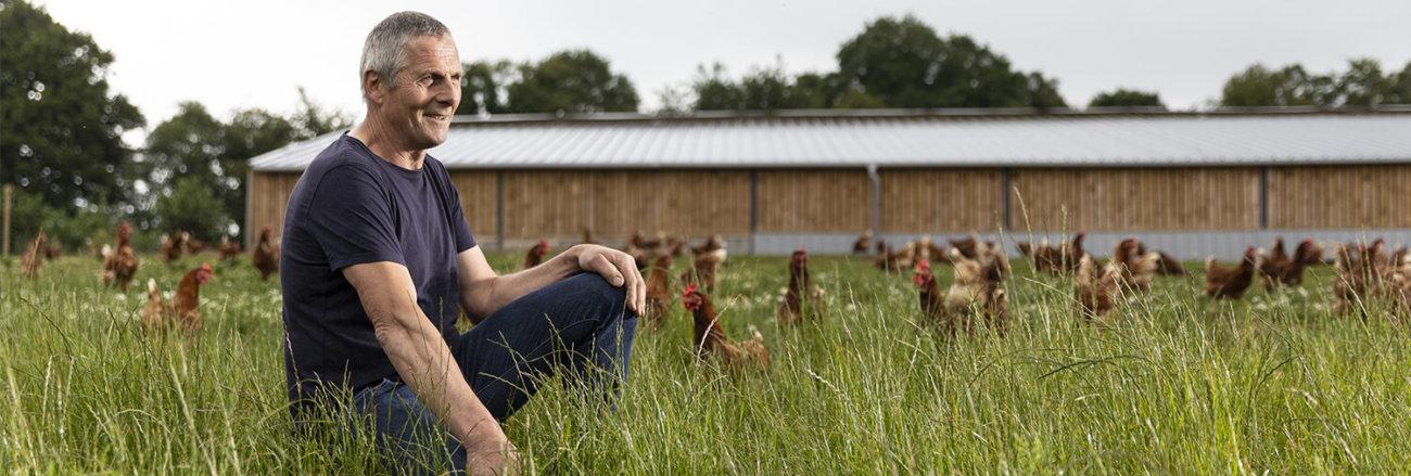 poules pondeuses plein air bio