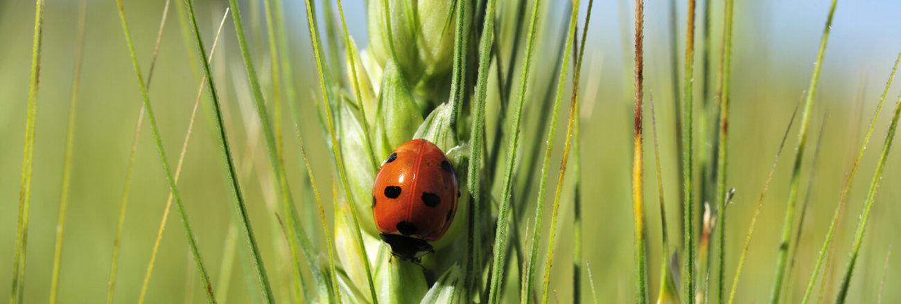 agriculture biologique UFAB