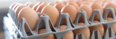 production œufs de la coopérative