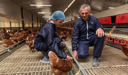 accompagnement technique et suivi d'élevage de poules pondeuses