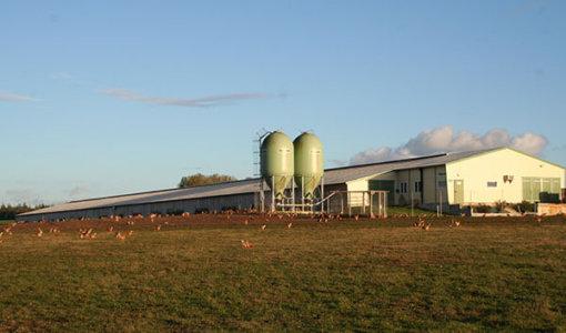 aide silo en poulettes et pondeuses