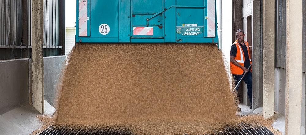 collecte de céréales conventionnels