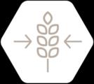 filière collecte de céréales