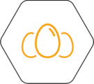 filière œuf