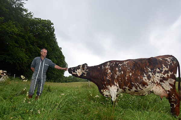 exploitation laitière en système pâturant