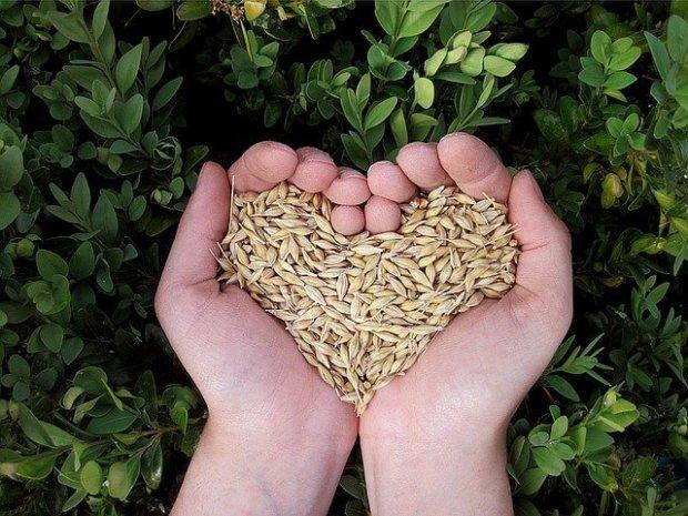 graines de céréales
