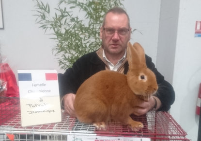 champion de france lapin fauve de bourgogne
