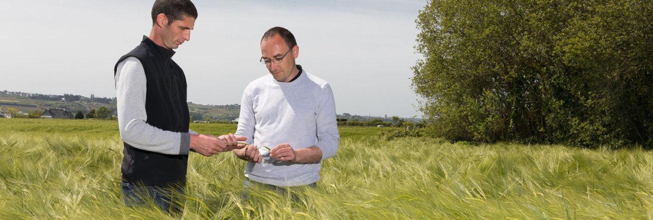 technicien cultures dans un champ de blé