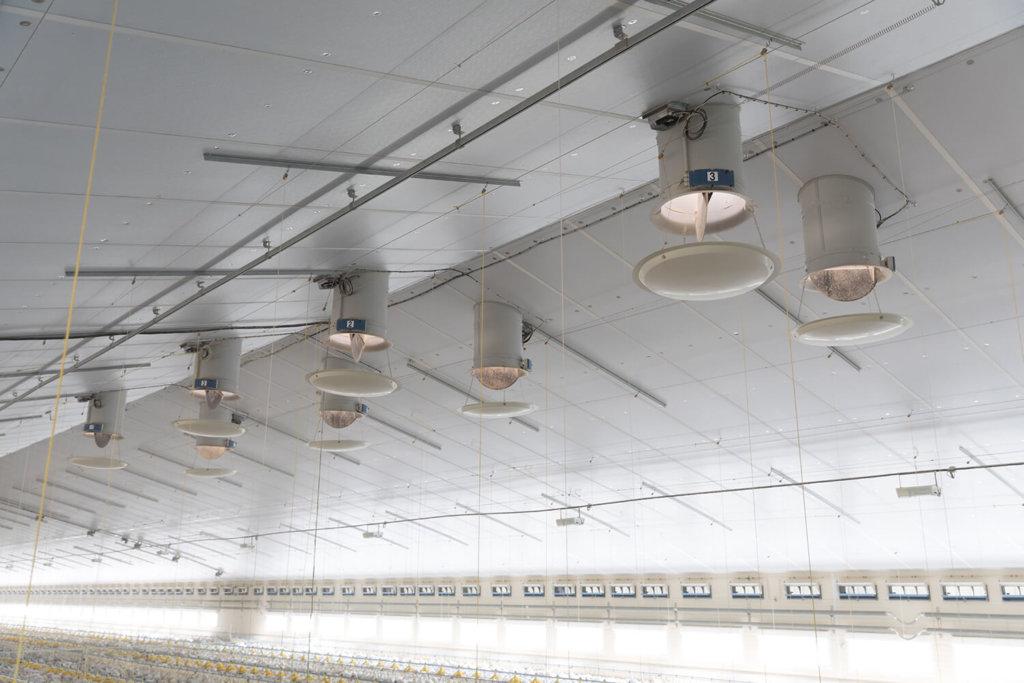 système de ventilation en volaille chair