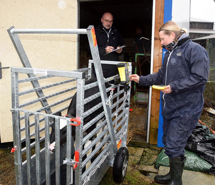 contrôle de performances du troupeau laitier